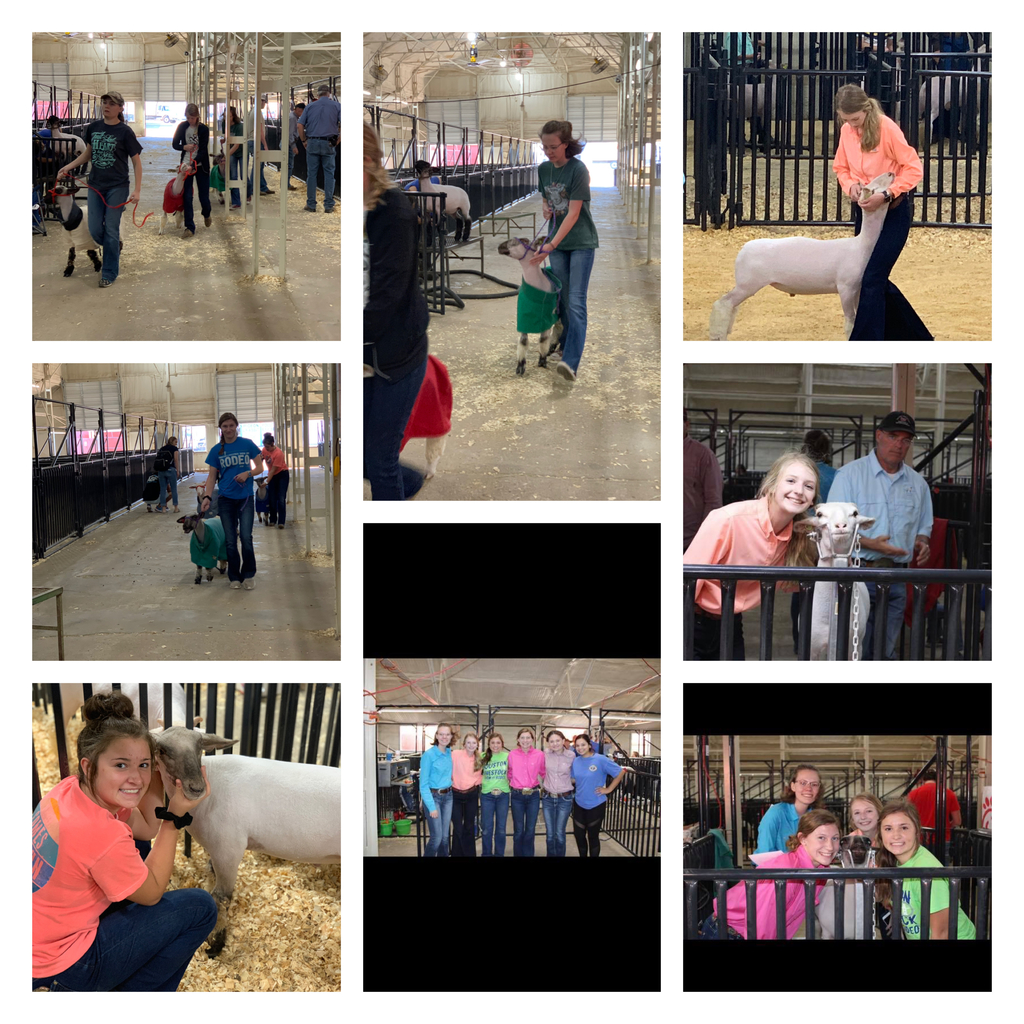 South Plains Fair stock show